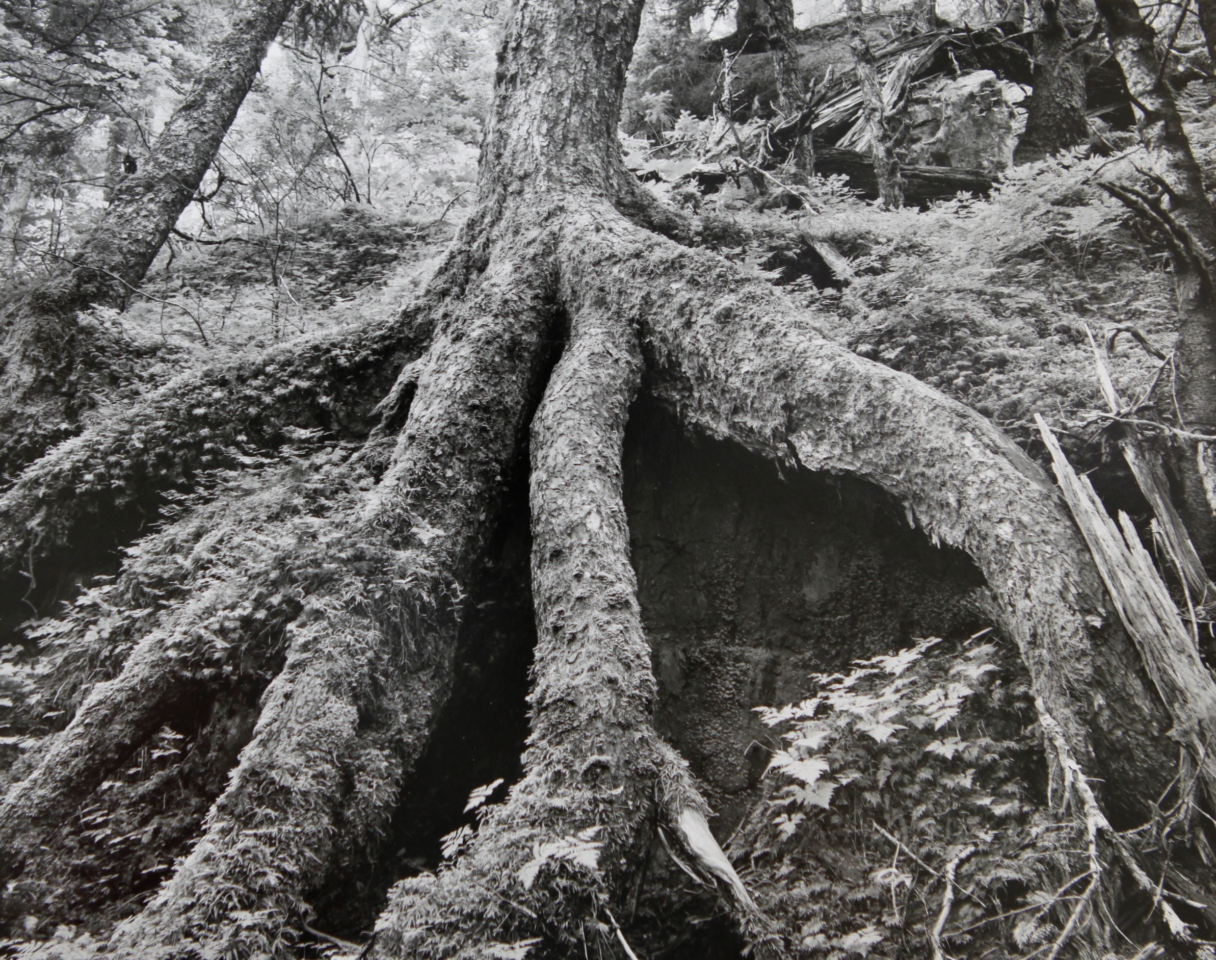 Roots, Chygach State Park, Alaska